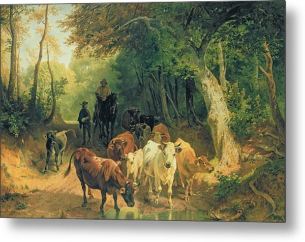 Cattle Watering In A Wooded Landscape Metal Print
