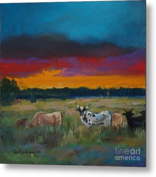Cattle's Cadence Metal Print
