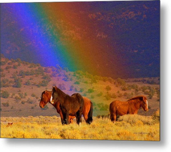 Caught In A Rainbow  Metal Print by Jeanne  Bencich-Nations