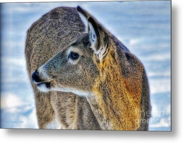 Cautious Deer Metal Print