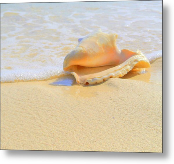 Cayman Conch #2 Metal Print