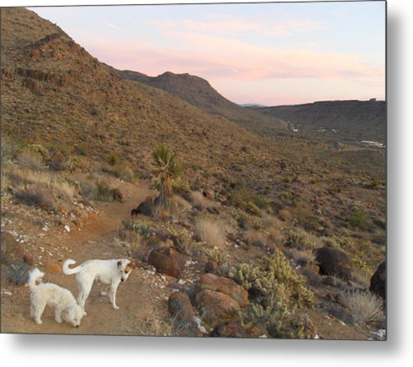 Ceaser, Mocha, And Chico In The Cerbat Mountains Metal Print by James Welch