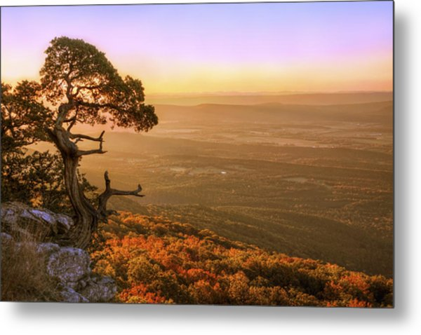 Cedar Tree Atop Mt. Magazine - Arkansas - Autumn Metal Print