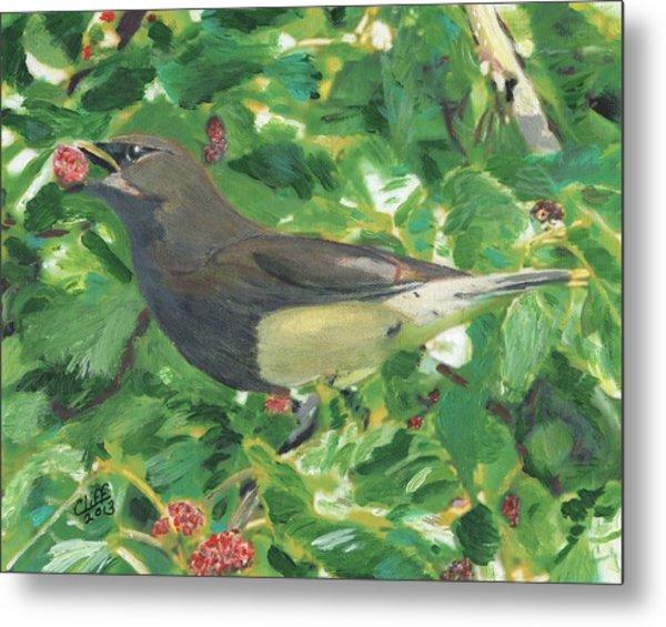 Cedar Waxwing Eating Mulberry Metal Print