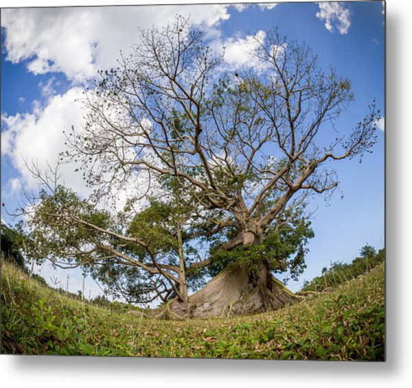 Ceiba Metal Print by Carl Engman