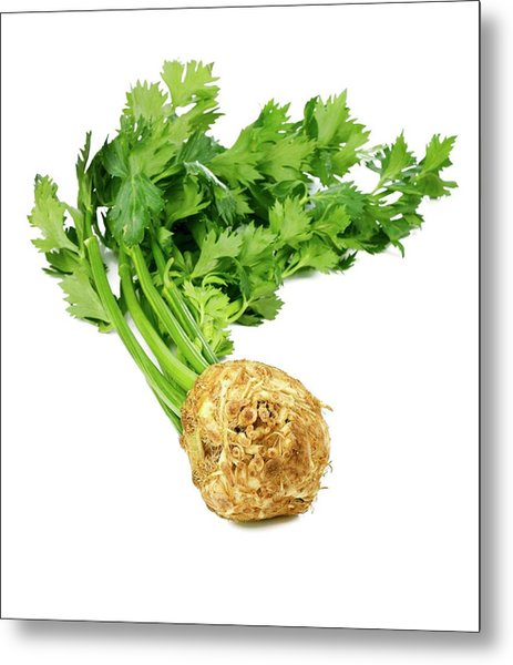 Celery Isolated On White Metal Print