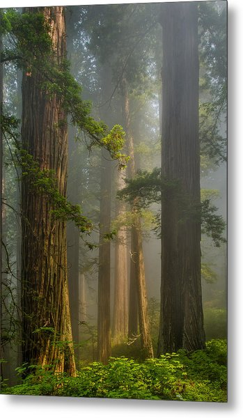 Center Of Forest Metal Print