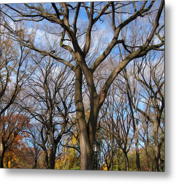 Central Park Trees Metal Print