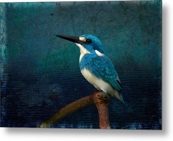 Cerulean Kingfisher Blue Alcedo Coerulescens Metal Print