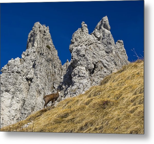 chamois in Alps Metal Print by Ioan Panaite