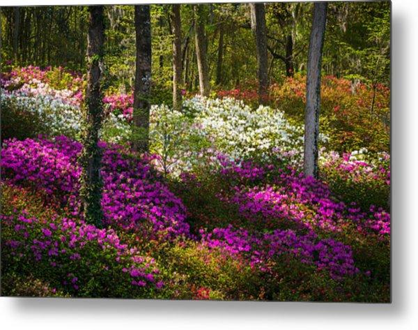 Charleston Sc Azalea Flowers And Sunlight - Fairytale Forest Metal Print