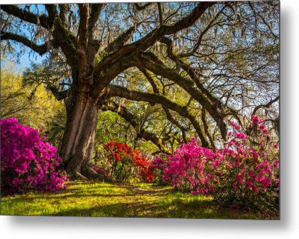 Charleston Sc Magnolia Plantation - Southern Hospitality Metal Print
