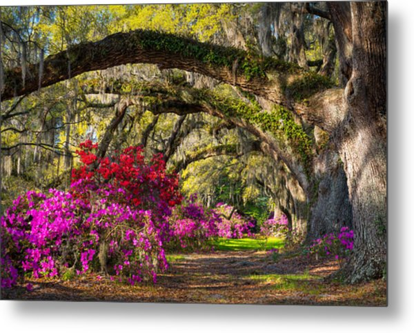 Charleston Sc Spring Azalea Flowers - A Servant's Grace Metal Print