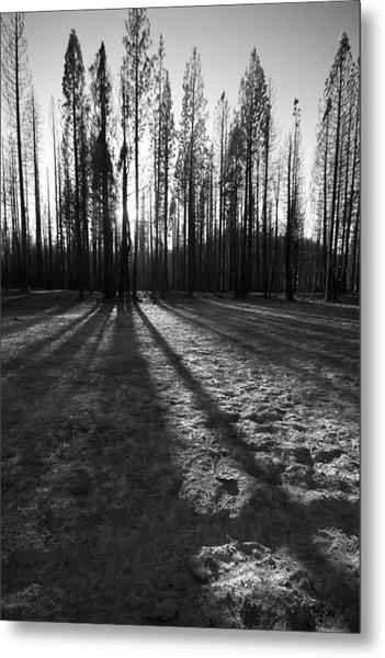 Charred Silence - Yosemite Rm Fire 2013 Metal Print