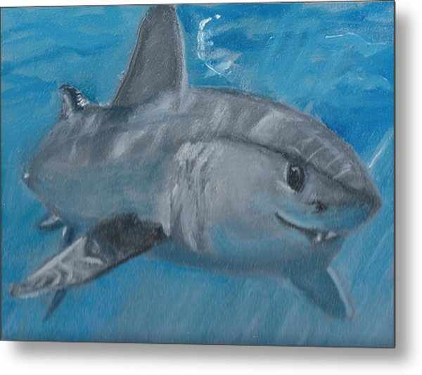 Cheeky Shark Metal Print