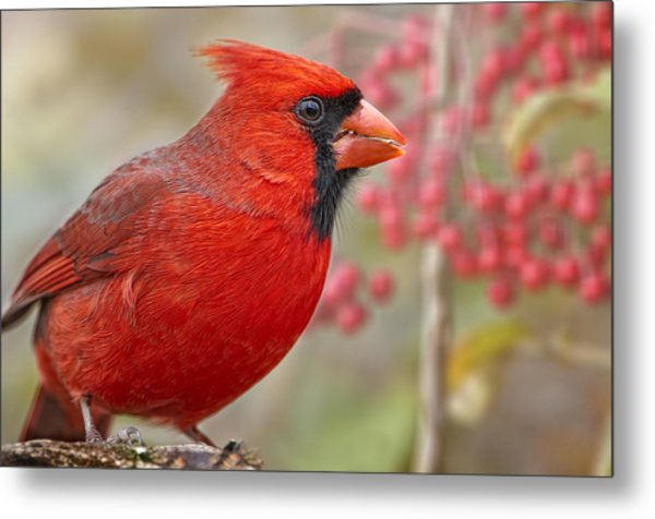 Cheerful Presence In The Garden Metal Print by Bonnie Barry