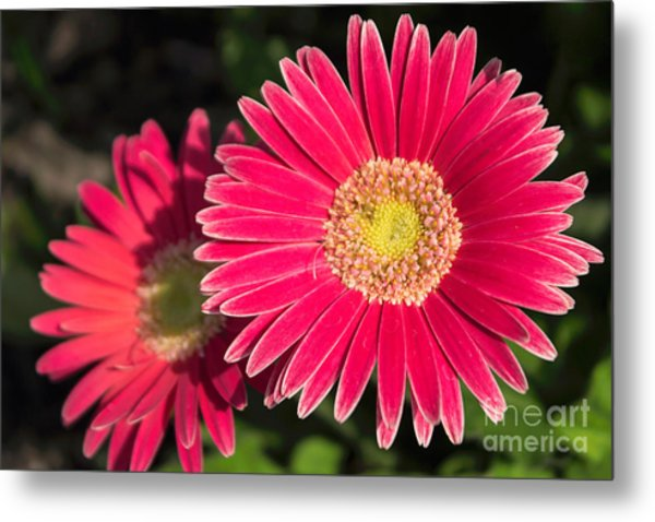 Cheerfulness Metal Print