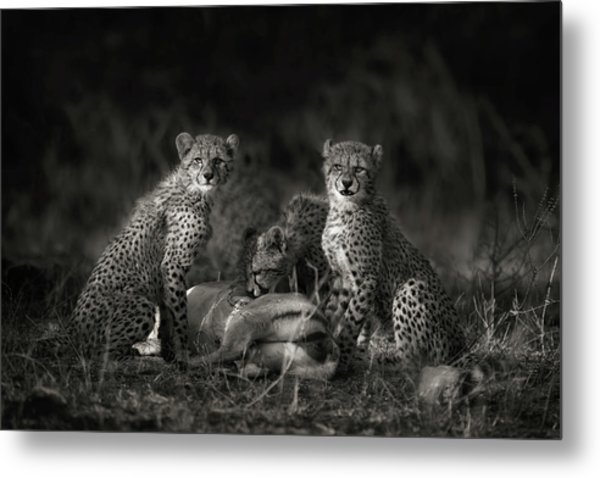 Cheetah Cubs Metal Print by Mario Moreno