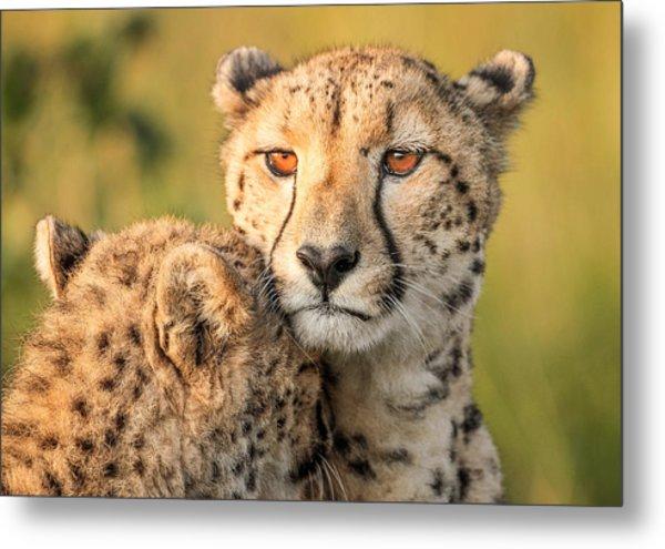 Cheetah Eyes Metal Print