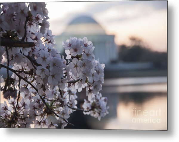 Cherry Blossom Memories Metal Print