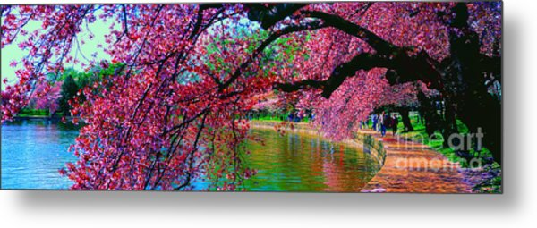 Cherry Blossom Walk Tidal Basin At 17th Street Metal Print