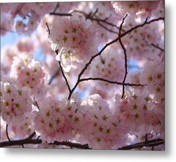 Cherry Blossoms And Blue Sky-1 Metal Print