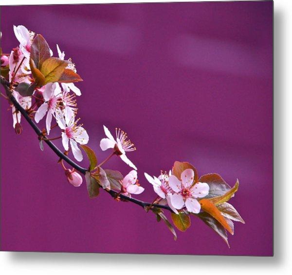 Cherry Blossoms And Plum Door Metal Print