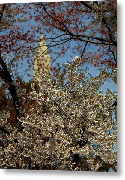 Cherry Blossoms And The Monument Metal Print