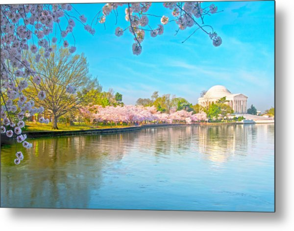 Cherry Blossoms From Shadow To Light Metal Print