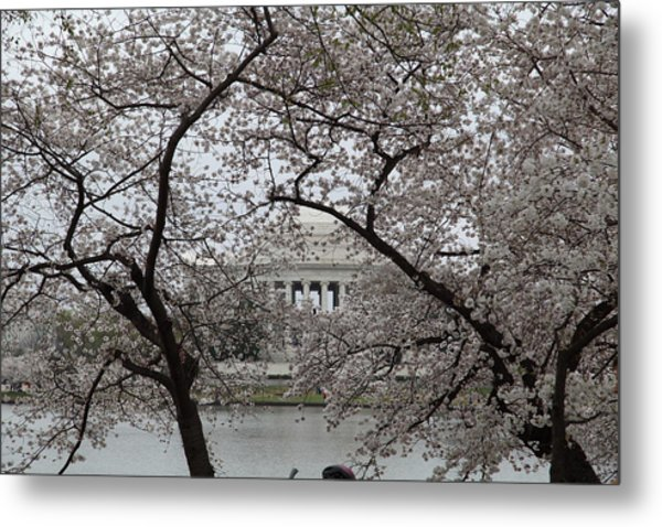 Cherry Blossoms With Jefferson Memorial - Washington Dc - 011352 Metal Print by DC Photographer