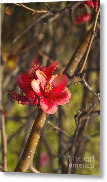 Cherry Blossoom Tree Metal Print