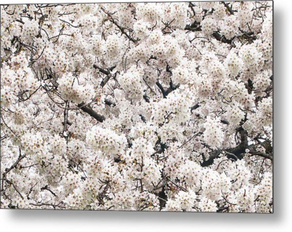 Cherry Dream Metal Print