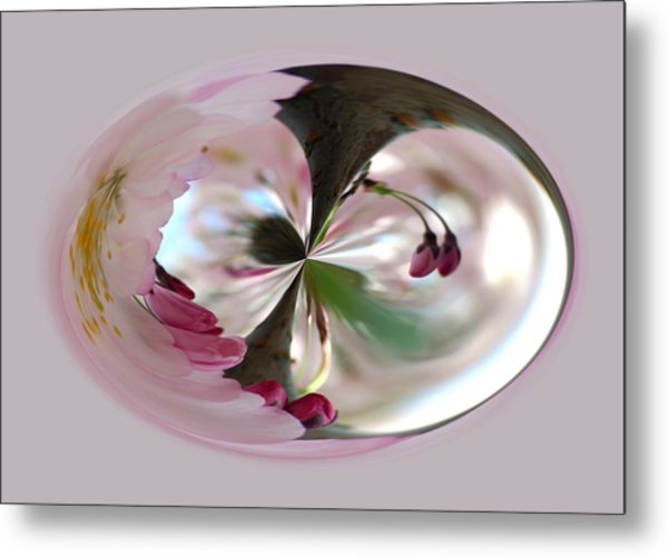 Cherry Tree Blossom Series 804 Metal Print