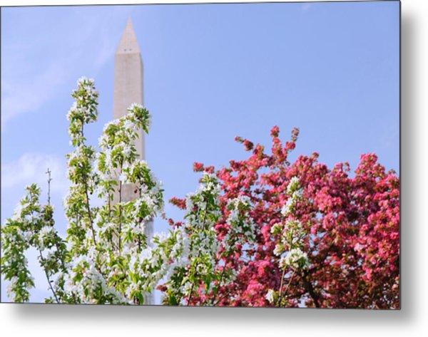 Cherry Trees And Washington Monument Four Metal Print