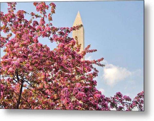 Cherry Trees And Washington Monument One Metal Print