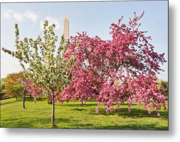 Cherry Trees And Washington Monument Three Metal Print