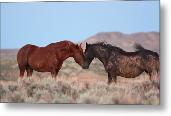 Chestnut Mustang Stallion And Black Mare Metal Print