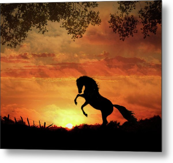 Chestnut Sunset Metal Print