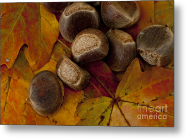Chestnuts And Fall Leaves Metal Print