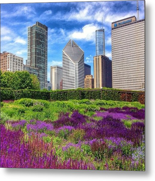 Chicago Skyline At Lurie Garden Metal Print