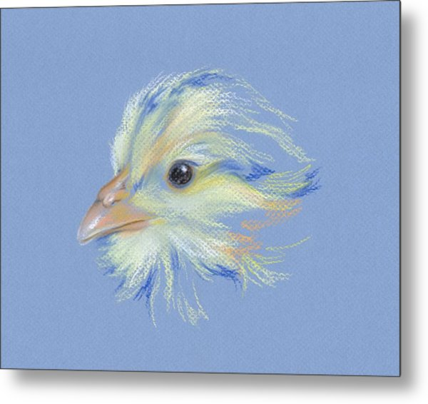 Chick - Plymouth Barred Rock Metal Print