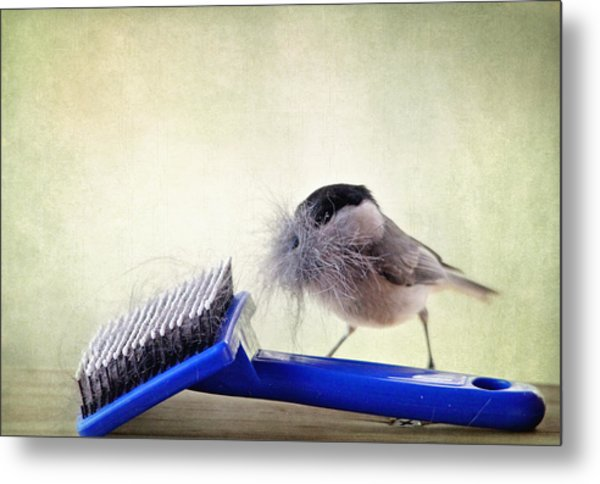 Chickadee At Work Metal Print