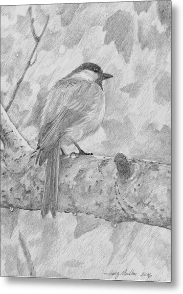 Chickadee In The Rain Metal Print