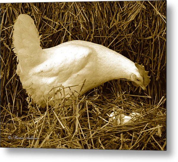 Chicken And Eggs Metal Print