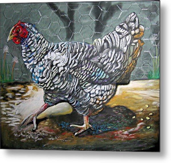 Chicken In The Pen Metal Print