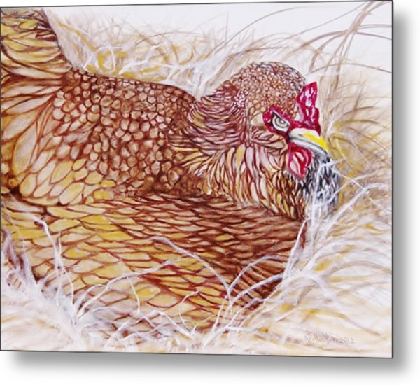 Chicken Laying Egg Metal Print