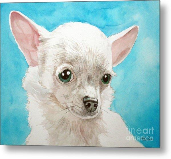 Chihuahua Dog White Metal Print