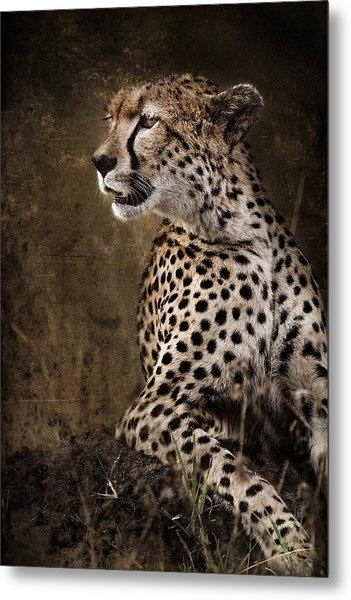 Chill Cheetah Metal Print