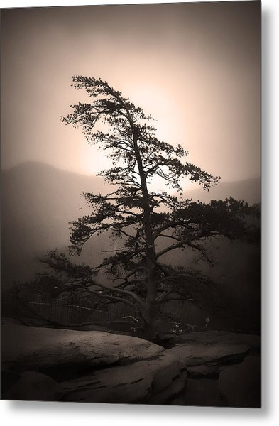 Chimney Rock Lone Tree In Sepia Metal Print