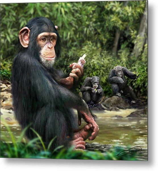 Chimpanzee Metal Print by Owen Bell